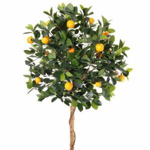 10 yaş mandalina ağacı