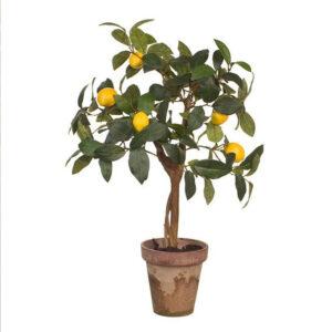 Limon Ağacı Evde